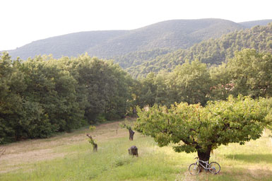 The cherry orchard outside Taylor's villa near Lourmarin in the South of France region and the white bicycle that inspired the title of the book